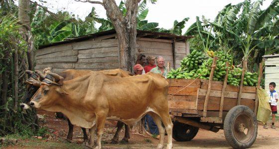 Guardalavaca, Cuba, 2008 523
