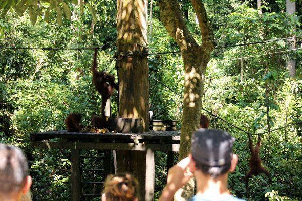 Sandakan, Borneo - OrkidéEkspressen