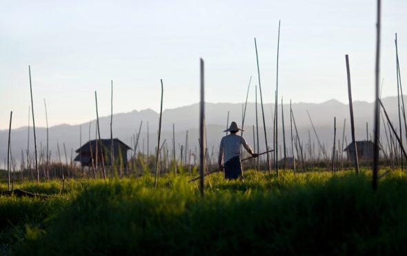 Flytende hage i Inle lake, Myanmar