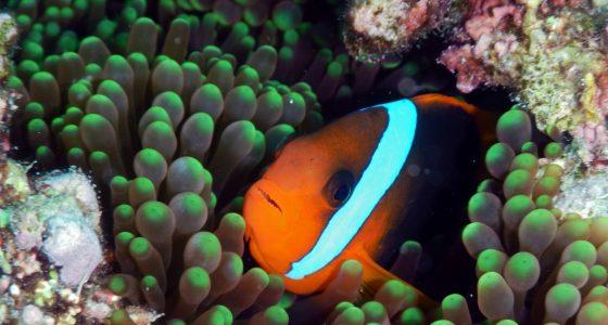 Bilde fra great barrier reef