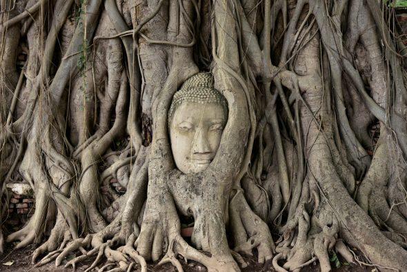 Ayutthaya, Thailand - OrkideEkspressen