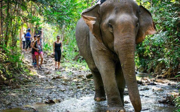 elefant mandalao